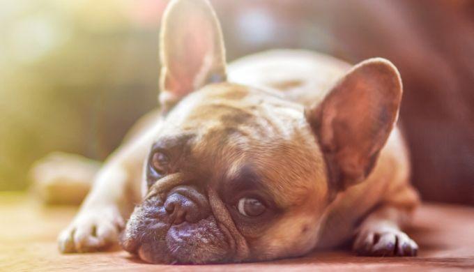 退屈な犬のイメージ画像